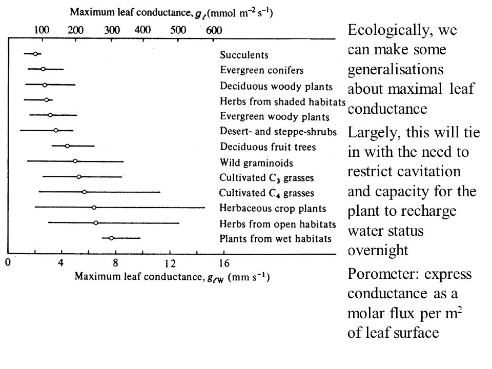 Ecologically, we can make some generalisations about maximal leaf conductance