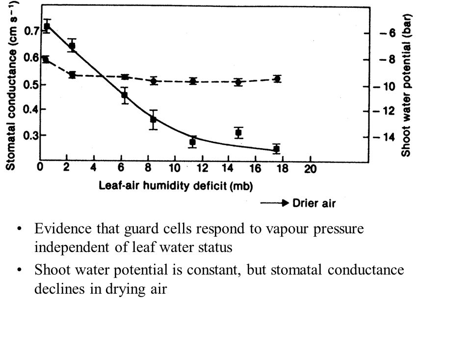 Evidence that guard cells respond to vapour pressure independent of leaf water status