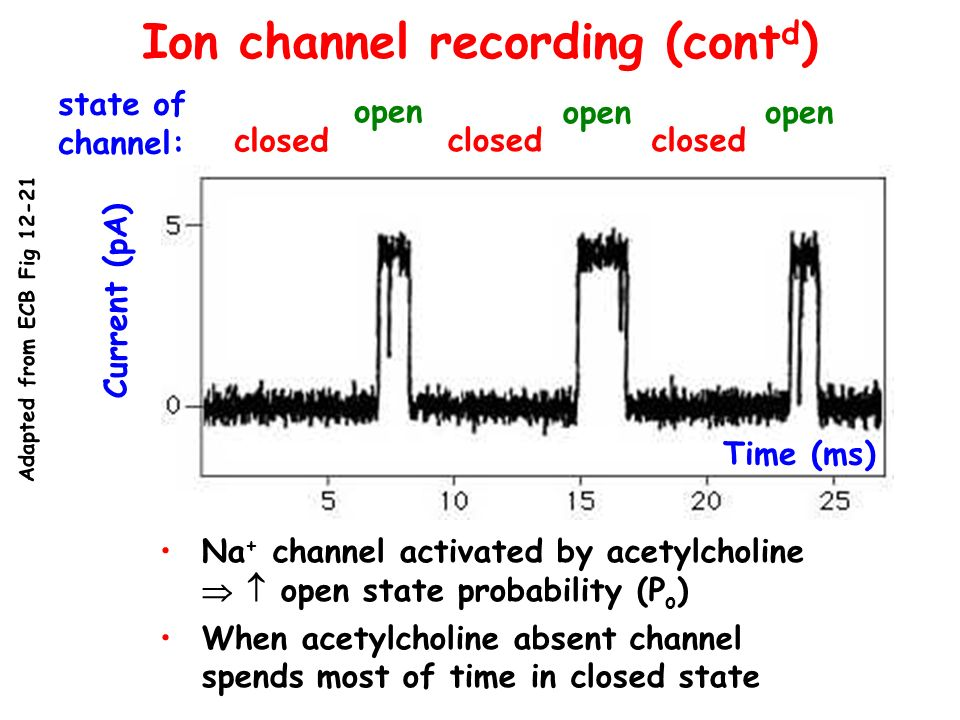 Ion channel recording (contd)
