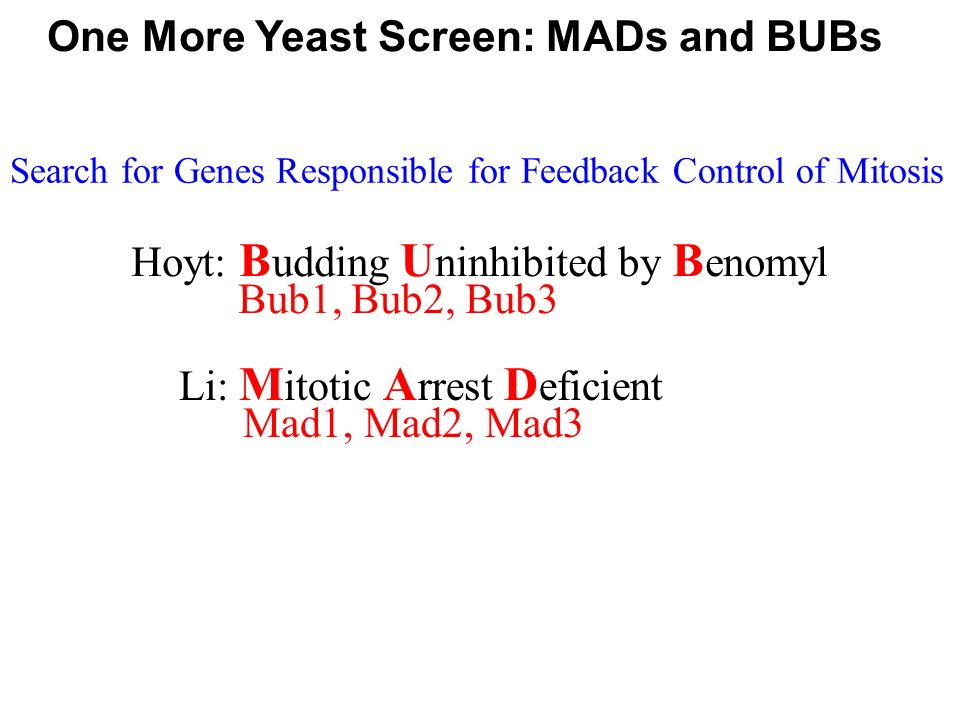 One More Yeast Screen: MADs and BUBs