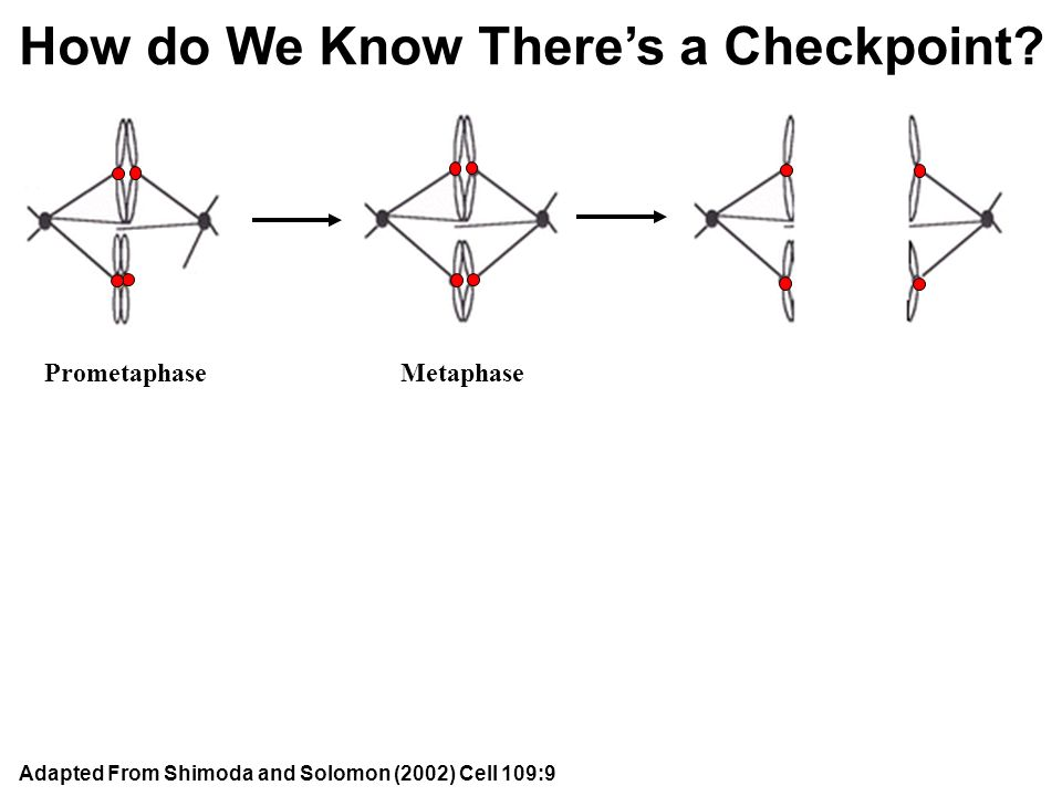 How do We Know There's a Checkpoint