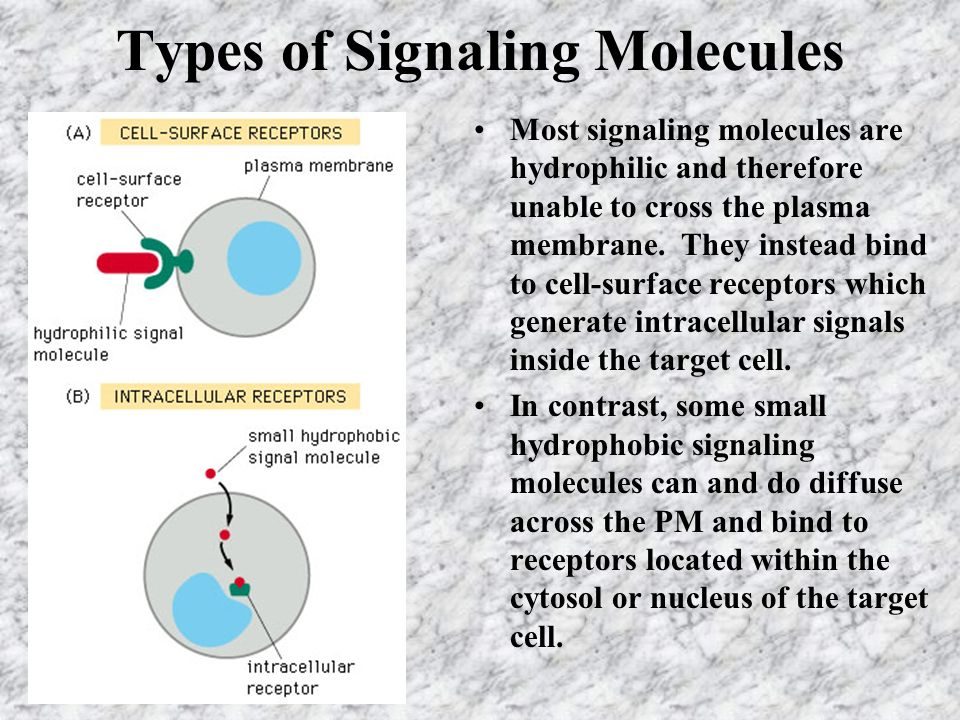 Types of Signaling Molecules