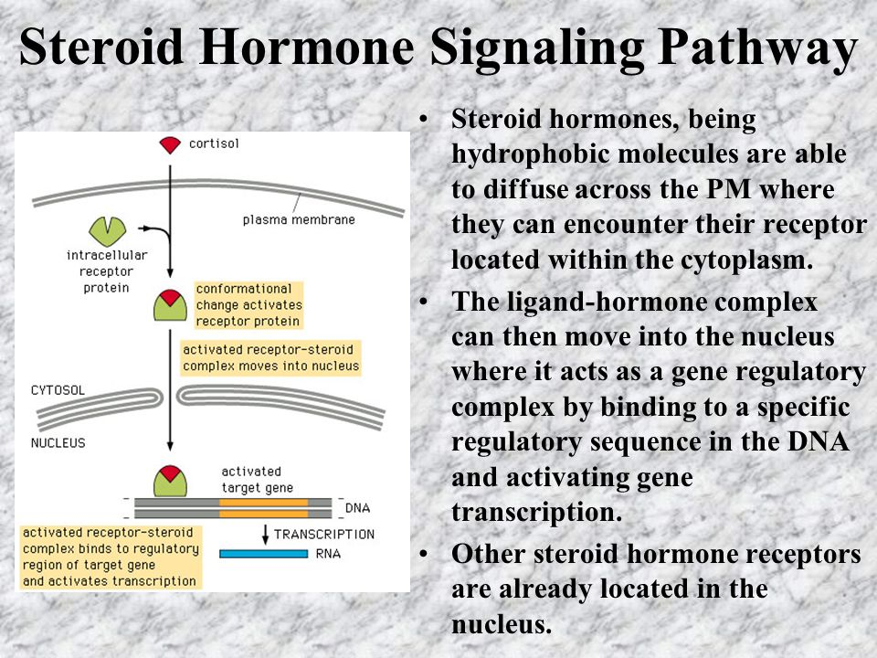 Steroid Hormone Signaling Pathway