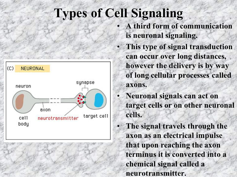 Types of Cell Signaling