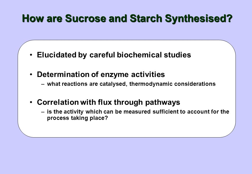 How are Sucrose and Starch Synthesised