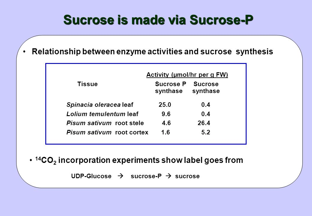 Sucrose is made via Sucrose-P