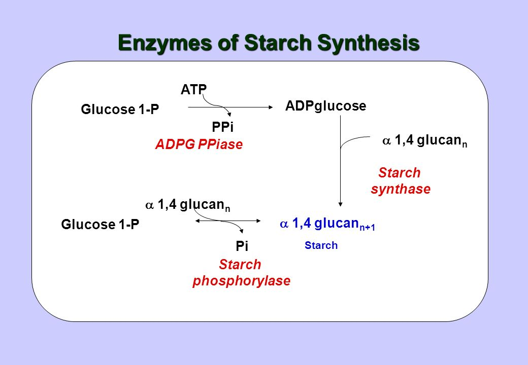 Enzymes of Starch Synthesis