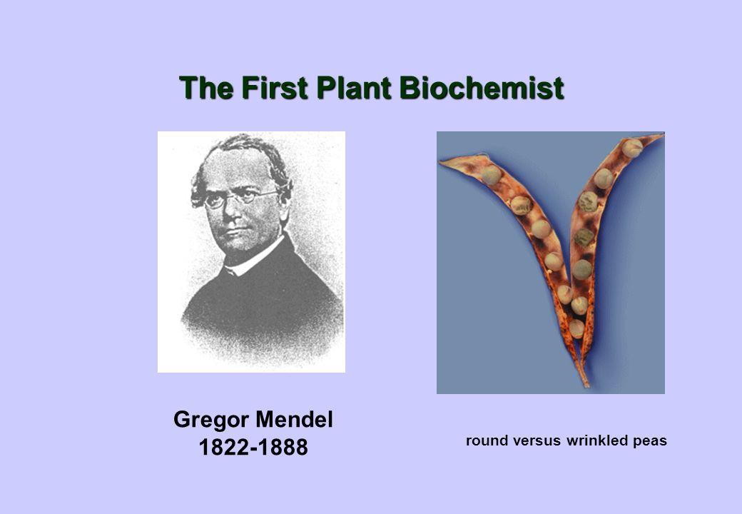 The First Plant Biochemist