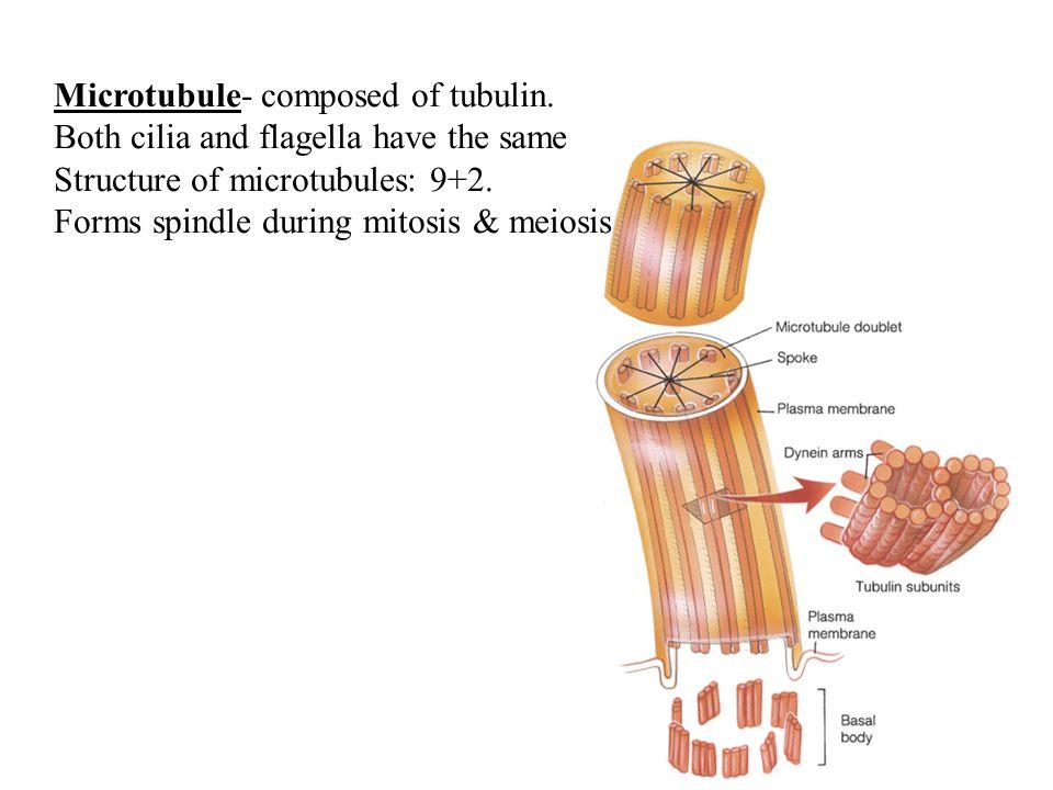 Microtubule- composed of tubulin.