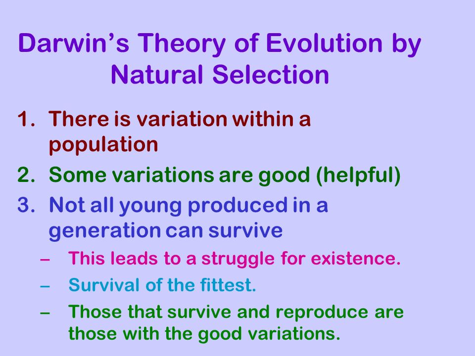 darwins theory on natural selection Natural selection n the process in nature by which, according to darwin's theory of evolution, organisms that are better adapted to their environment tend to survive longer.