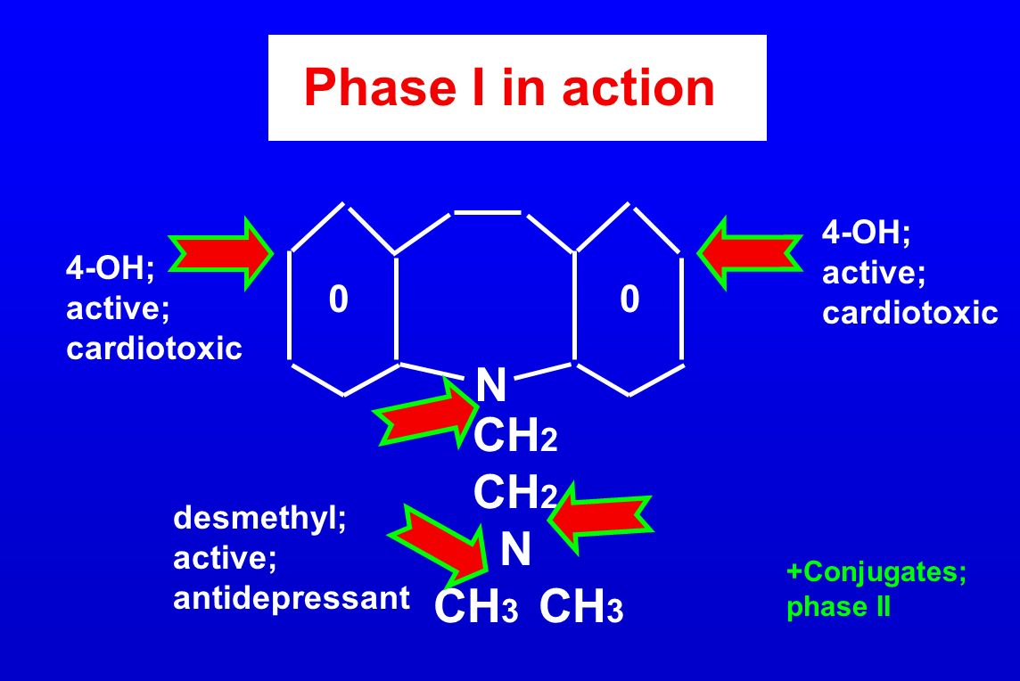 Phase I in action N CH2 N CH3 CH3 4-OH; active; 4-OH; cardiotoxic