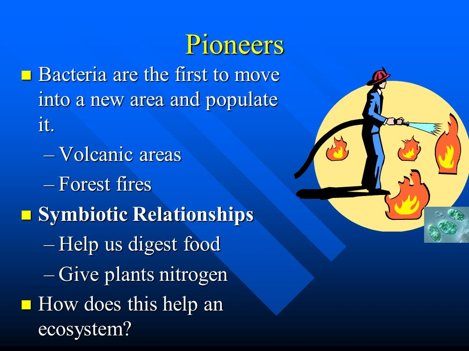 Pioneers Bacteria are the first to move into a new area and populate it. Volcanic areas. Forest fires.