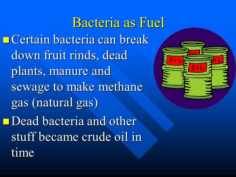 Bacteria as Fuel Certain bacteria can break down fruit rinds, dead plants, manure and sewage to make methane gas (natural gas)