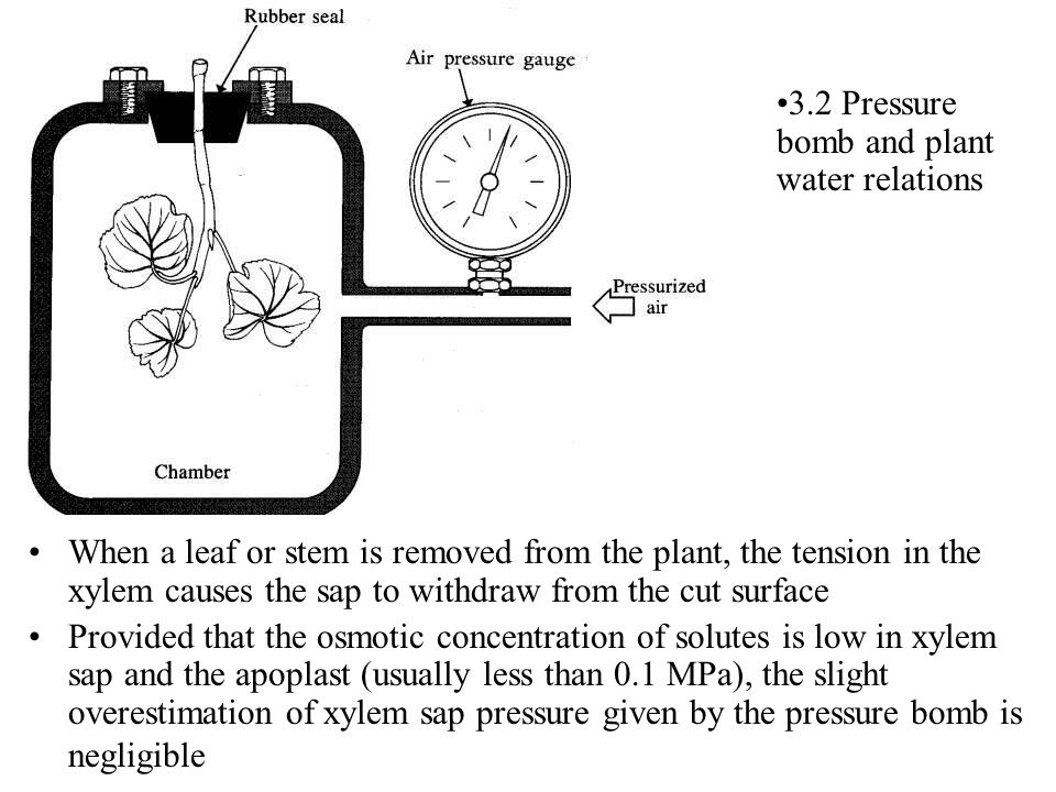 3.2 Pressure bomb and plant water relations