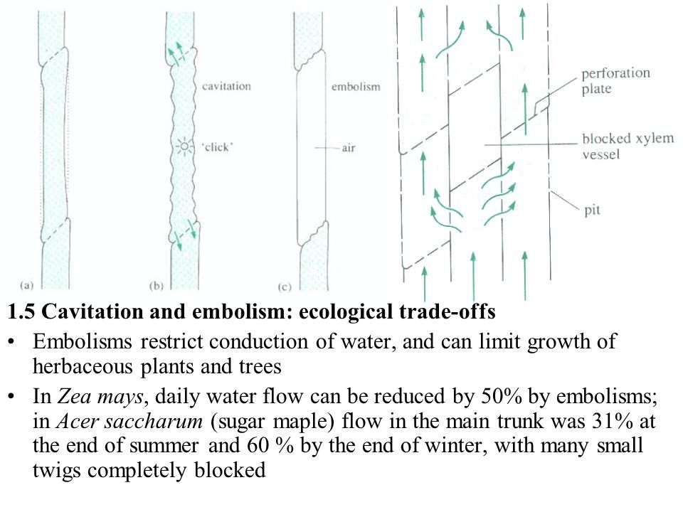 1.5 Cavitation and embolism: ecological trade-offs