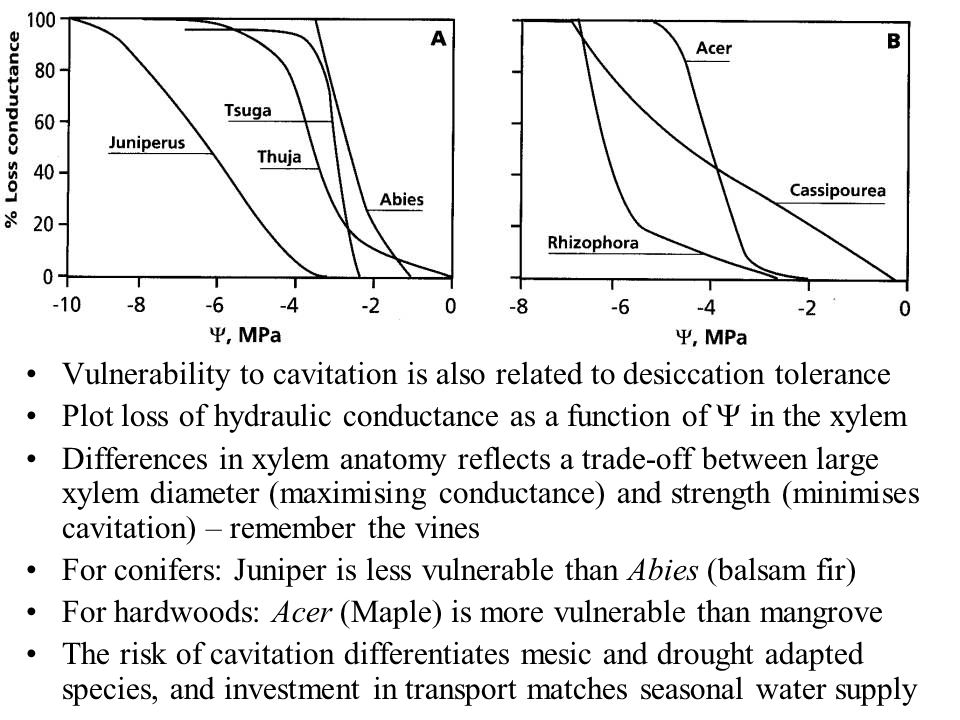 Vulnerability to cavitation is also related to desiccation tolerance