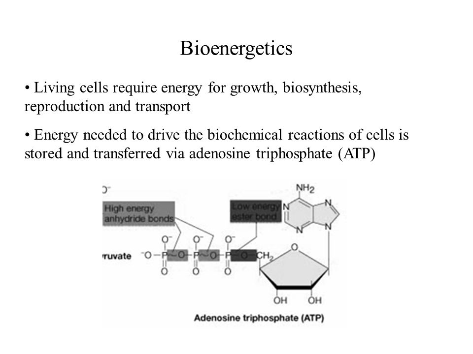 BioenergeticsLiving cells require energy for growth, biosynthesis, reproduction and transport.
