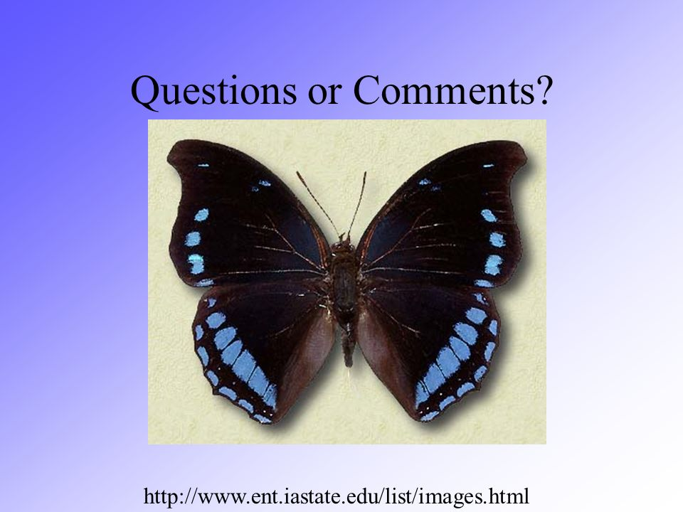 Questions or Comments http://www.ent.iastate.edu/list/images.html