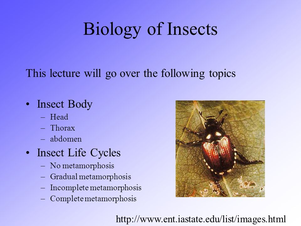 Biology of Insects This lecture will go over the following topics