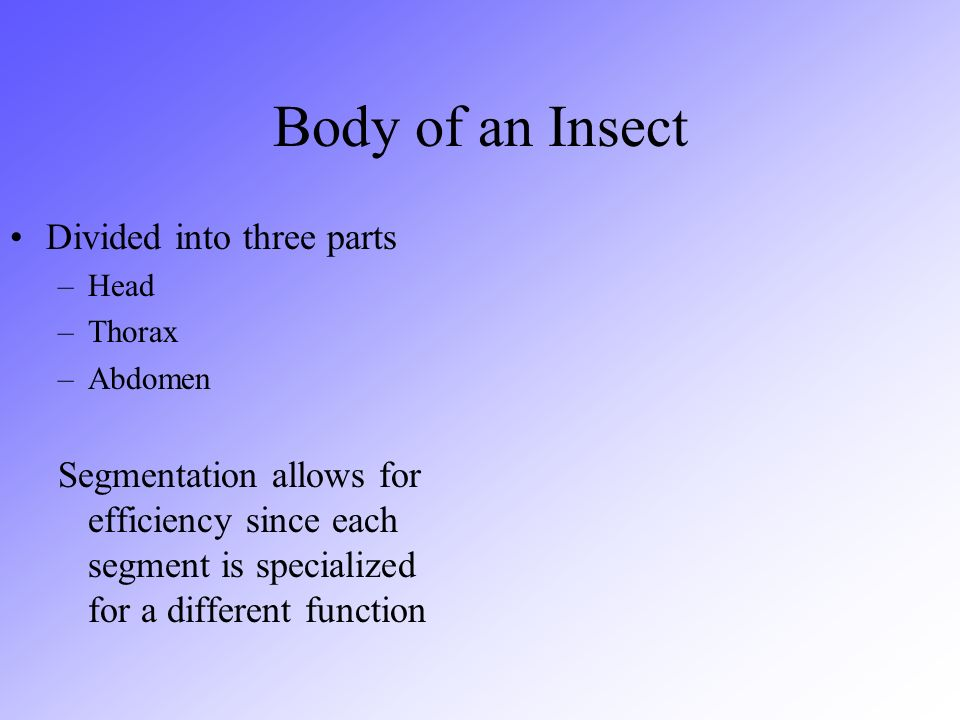 Body of an Insect Divided into three parts