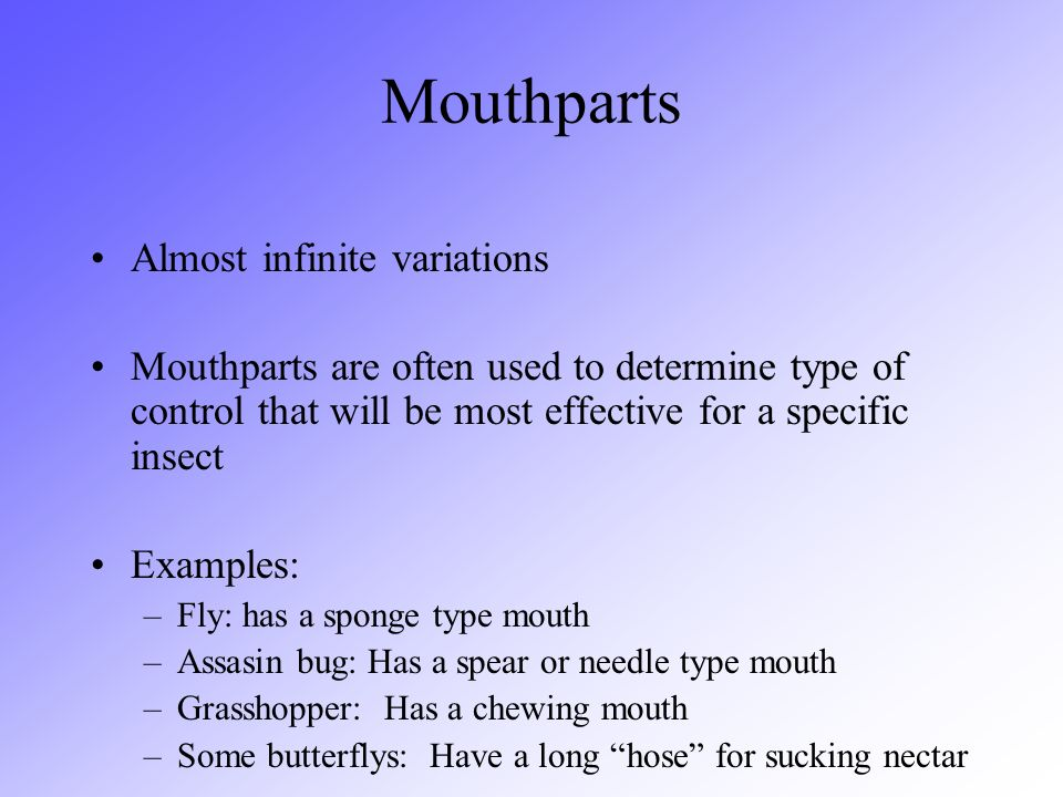 Mouthparts Almost infinite variations