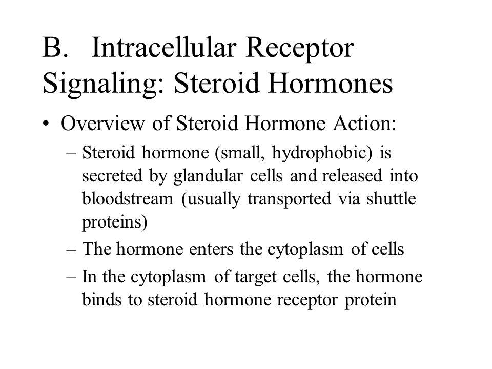B. Intracellular Receptor Signaling: Steroid Hormones