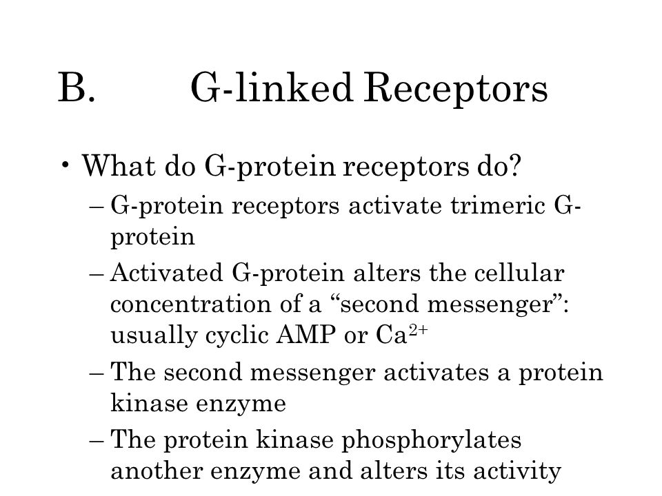 B. G-linked Receptors What do G-protein receptors do