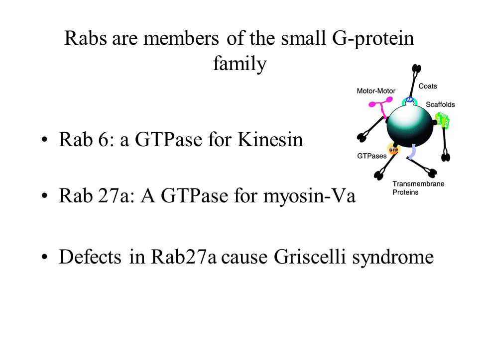 Rabs are members of the small G-protein family