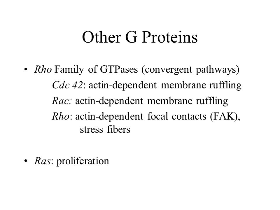 Other G Proteins Rho Family of GTPases (convergent pathways)