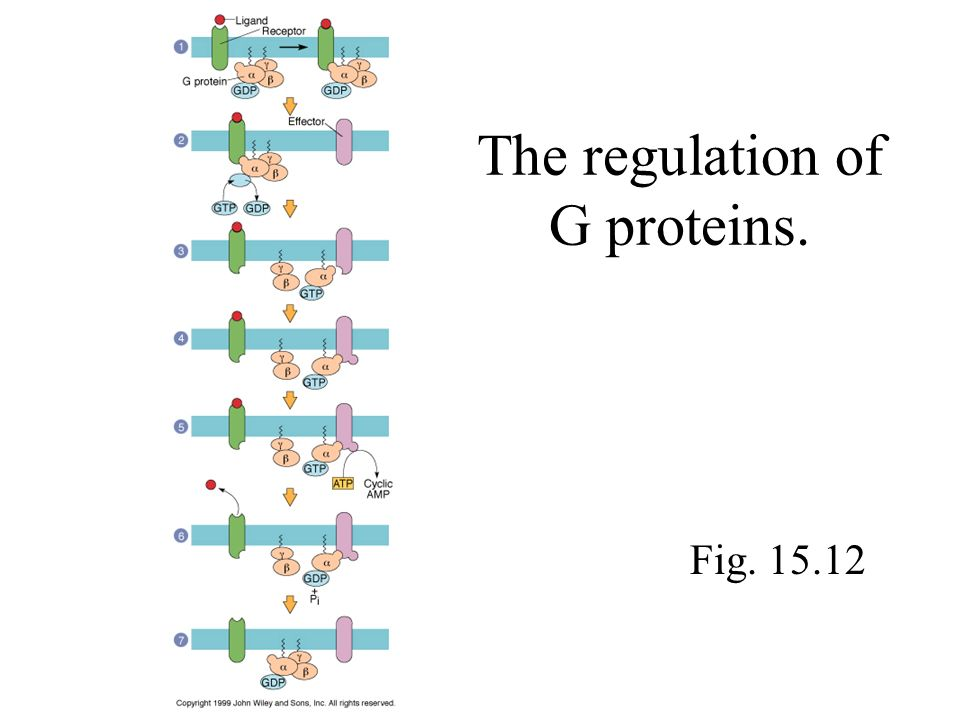 The regulation of G proteins.