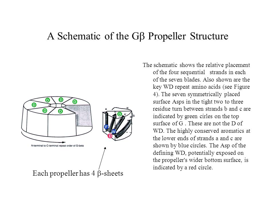 A Schematic of the Gb Propeller Structure