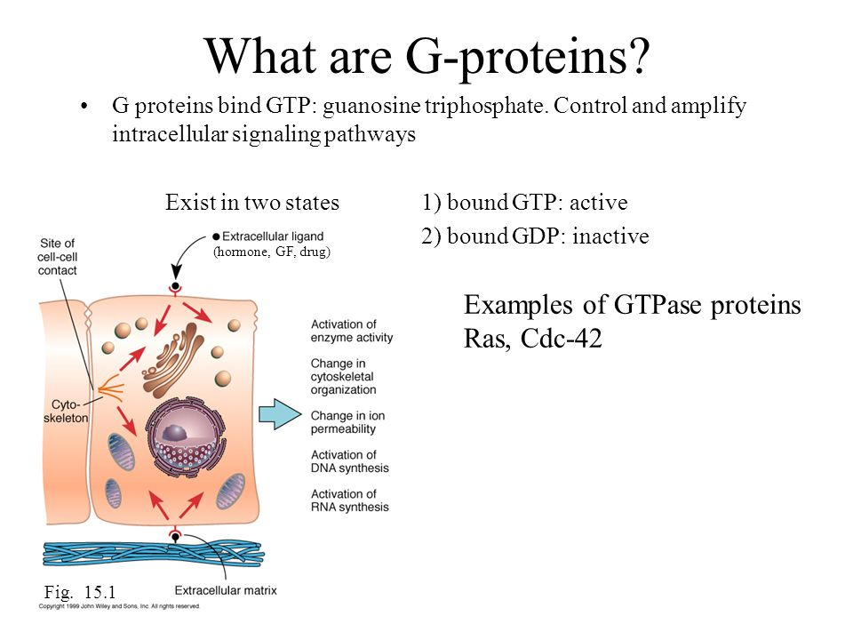 What are G-proteins Examples of GTPase proteins Ras, Cdc-42