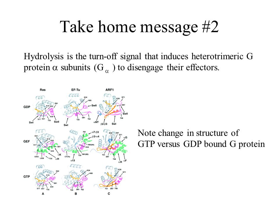 Take home message #2 Hydrolysis is the turn-off signal that induces heterotrimeric G protein a subunits (G a ) to disengage their effectors.