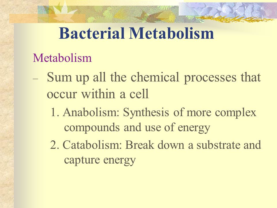 Bacterial Metabolism Metabolism. Sum up all the chemical processes that occur within a cell.
