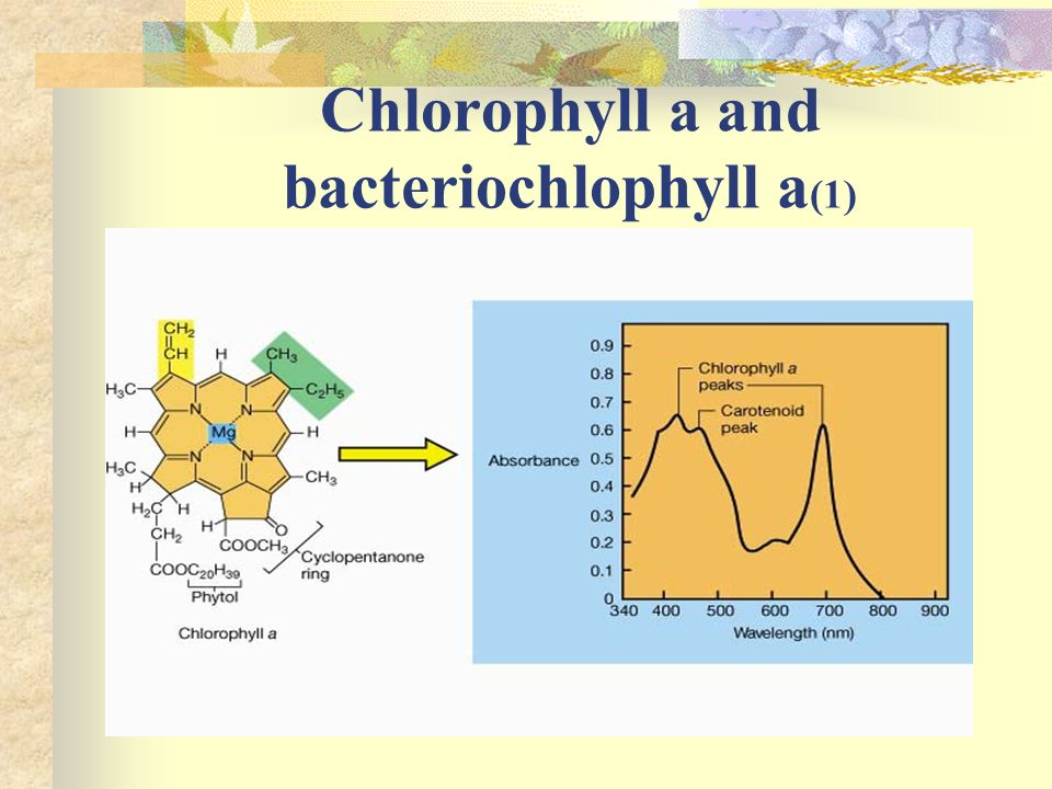 Chlorophyll a and bacteriochlophyll a(1)