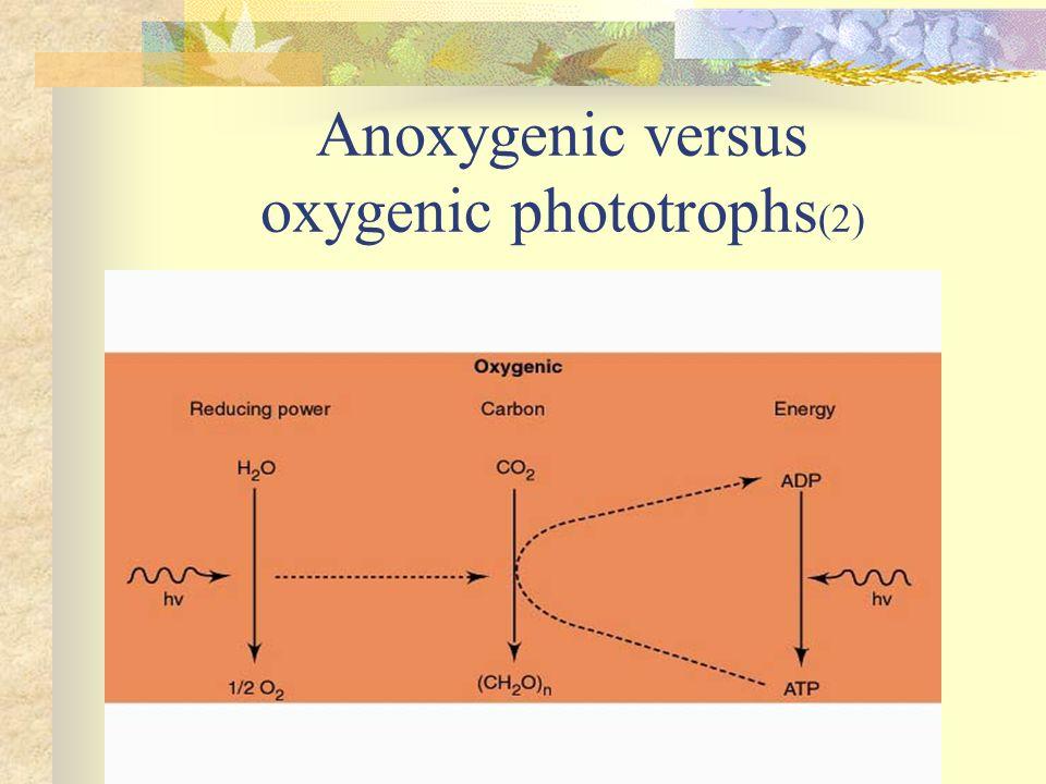 Anoxygenic versus oxygenic phototrophs(2)