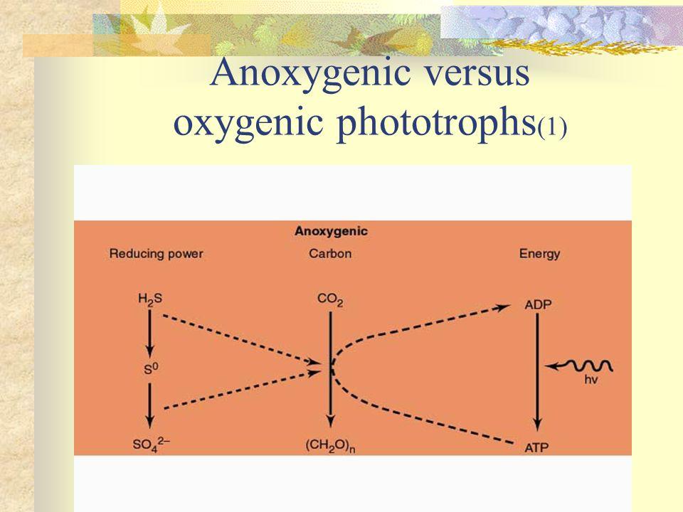 Anoxygenic versus oxygenic phototrophs(1)