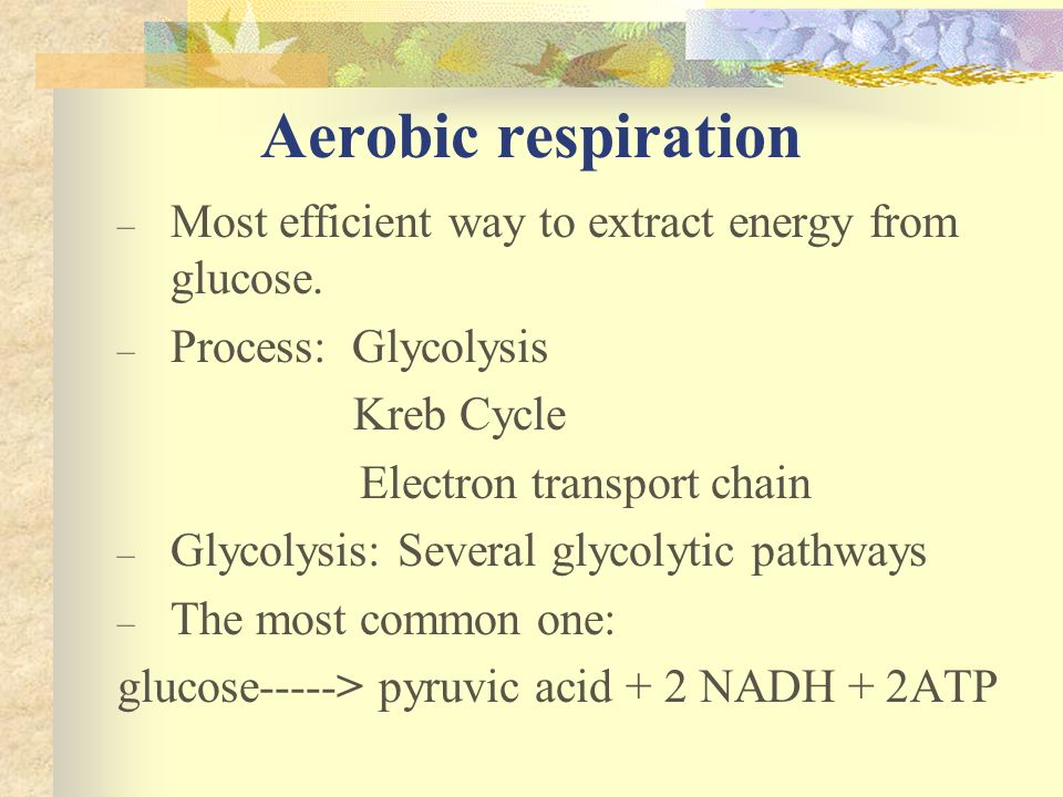 Aerobic respiration Most efficient way to extract energy from glucose.