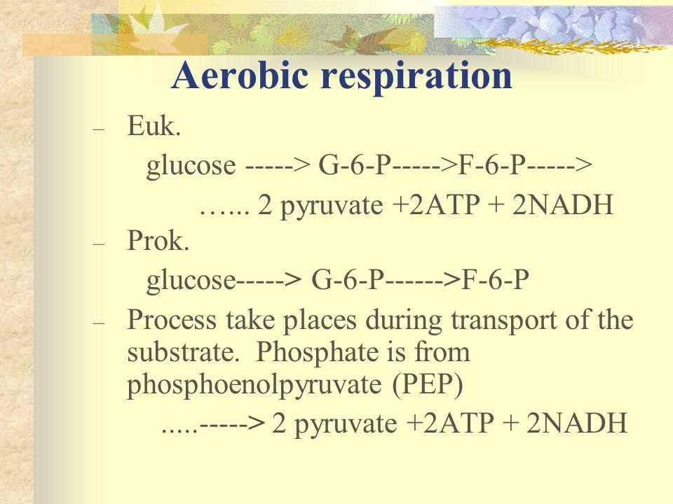 Aerobic respiration Euk.
