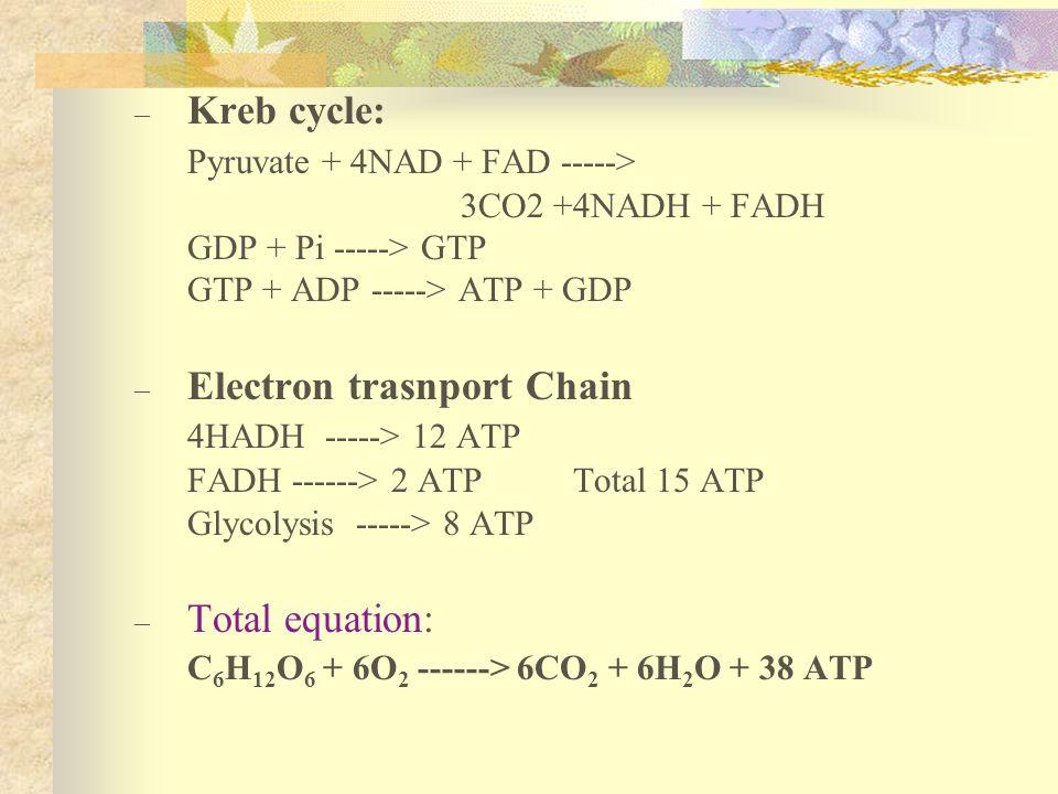 Pyruvate + 4NAD + FAD ----->