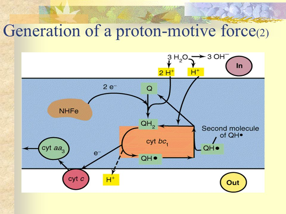 Generation of a proton-motive force(2)