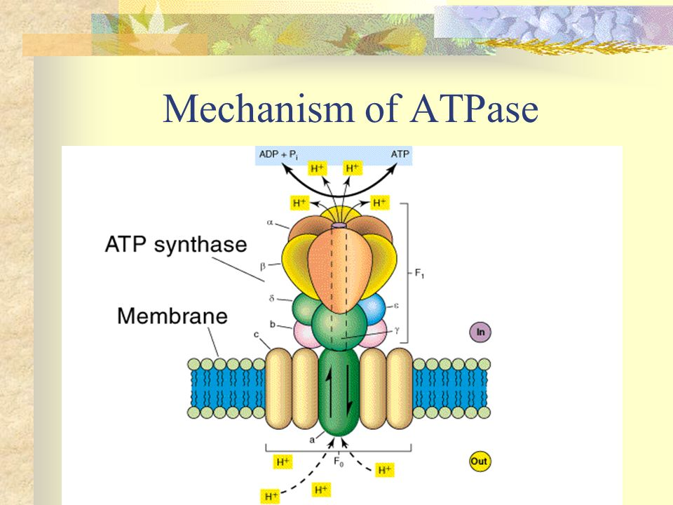 Mechanism of ATPase