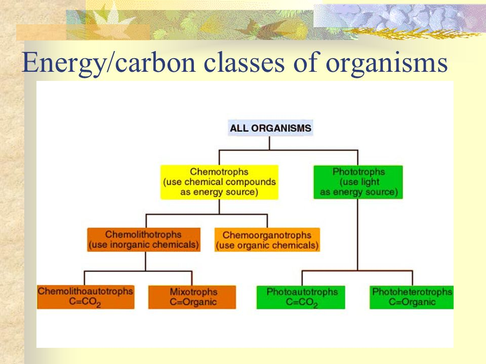 Energy/carbon classes of organisms