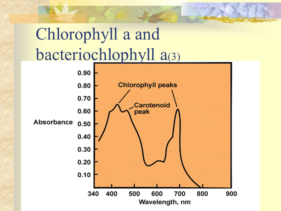 Chlorophyll a and bacteriochlophyll a(3)
