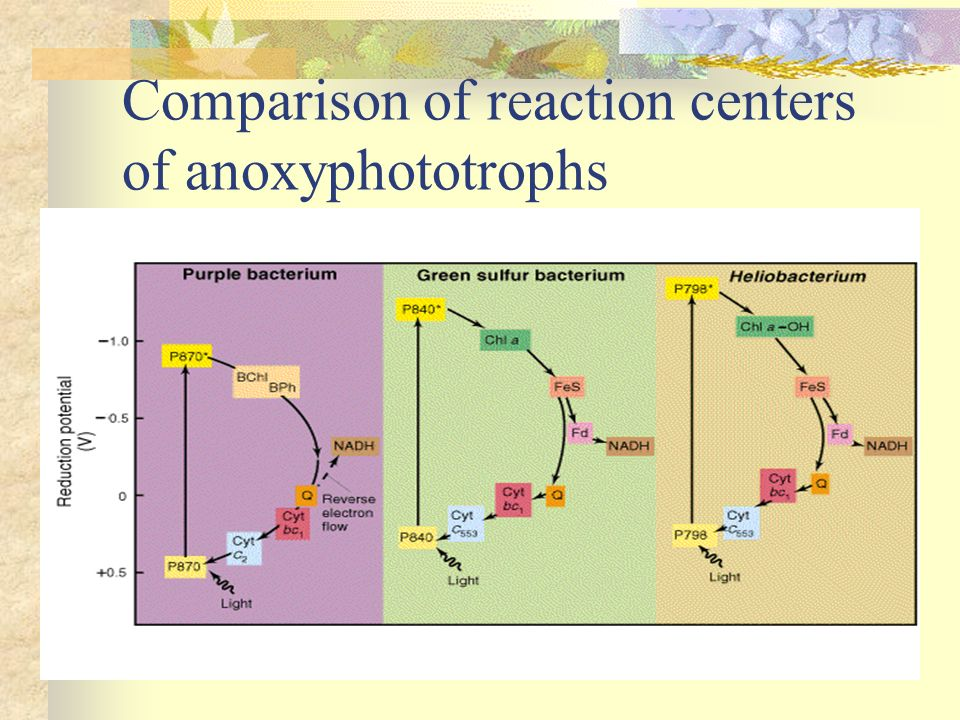 Comparison of reaction centers of anoxyphototrophs