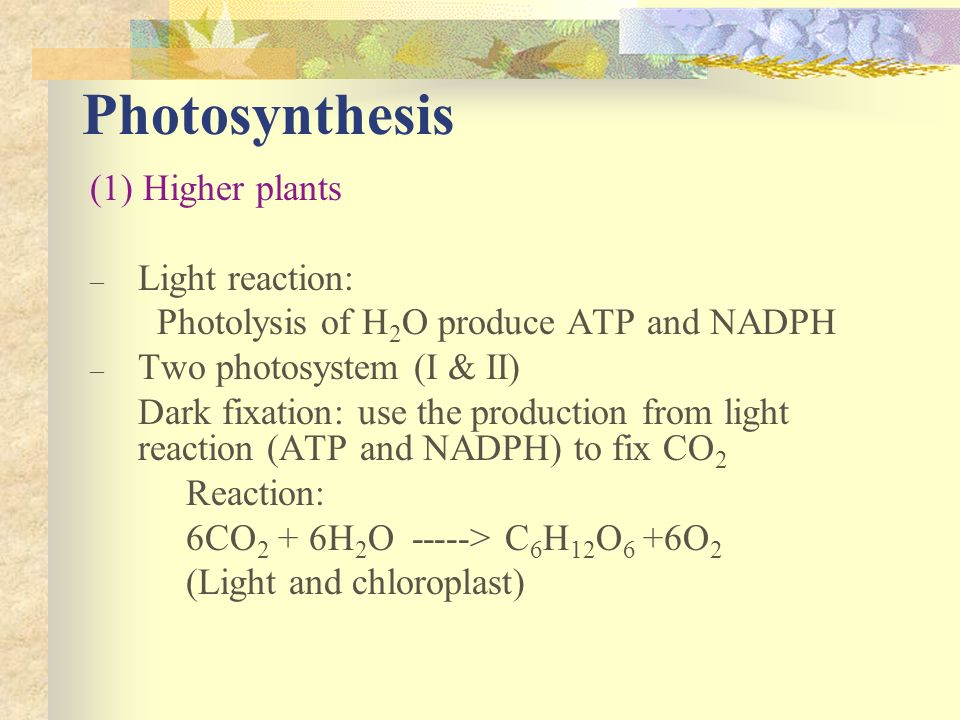 Photosynthesis (1) Higher plants Light reaction: