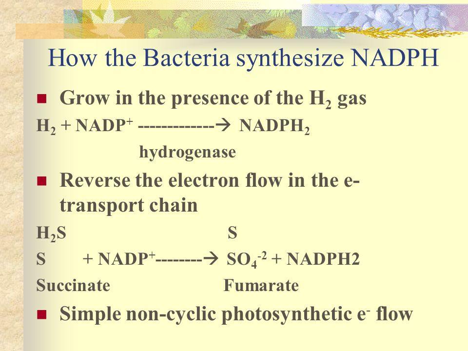 How the Bacteria synthesize NADPH