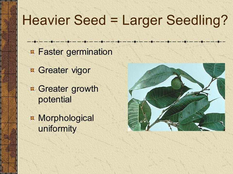 Heavier Seed = Larger Seedling