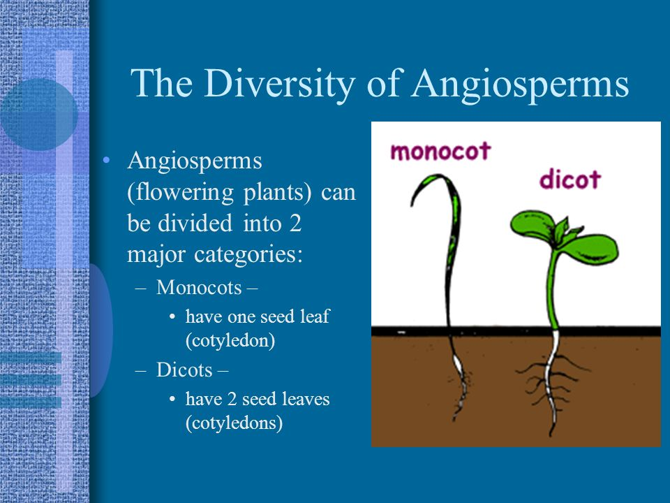The Diversity of Angiosperms