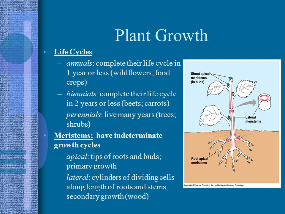 Plant Growth Life Cycles